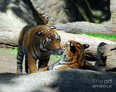 Tiger Eyes Photograph - Tiger Love 2 by Mel Steinhauer