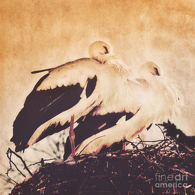 Stork Mixed Media - Together by Angela Doelling AD DESIGN Photo and PhotoArt