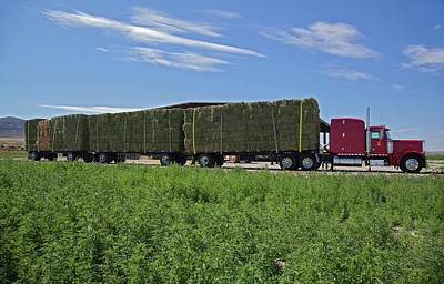 Medicago Photograph - Transporting Bales Of Hay by Jim West