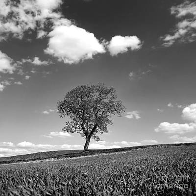 Spring Scenes Photograph - Tree by Bernard Jaubert