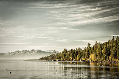 Photograph - Trees At The Lakeside by Celso Diniz