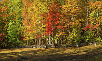 Trees In A Forest, Roaring Fork Motor Art Print by Panoramic Images
