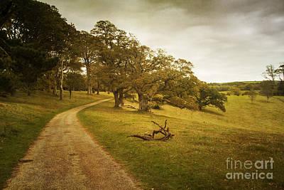 Photograph - Trellisick Park  by Brian Roscorla