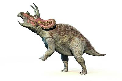 Triceratops Dinosaur Art Print