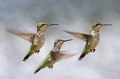 Avian Photograph - Trio by Betsy Knapp