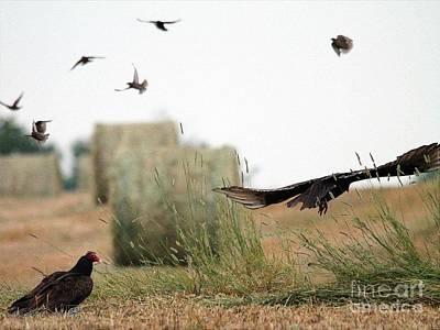 Starlings Painting - Turkey Vultures by J McCombie