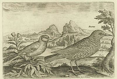 Blackbird Drawing - Two Birds In A Landscape, Adriaen Collaert by Adriaen Collaert