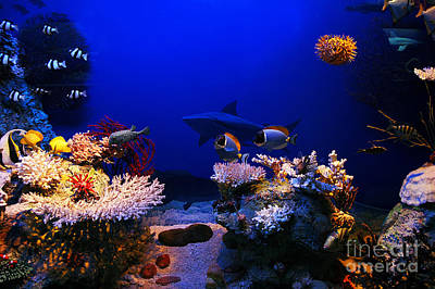 Fall Animals - Underwater scene by Michal Bednarek