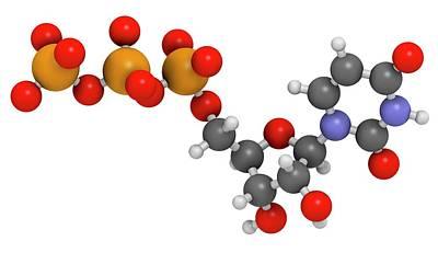 Triphosphate Photograph - Uridine Triphosphate Nucleotide Molecule by Molekuul