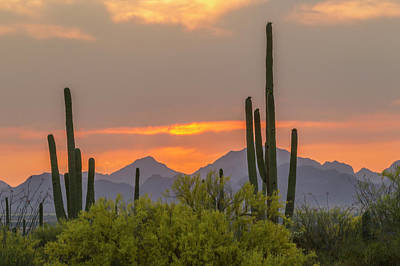 Desert Sunset Photograph - Usa, Arizona, Saguaro National Park by Jaynes Gallery