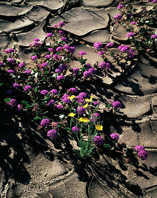 Usa, California, Anza Borrego Desert Art Print by Christopher Talbot Frank