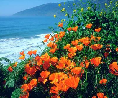 Usa, California, California Poppies Art Print