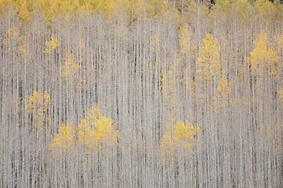 White River Photograph - Usa, Colorado, White River National by Jaynes Gallery