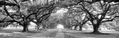 Photograph - Usa, Louisiana, New Orleans, Brick Path by Panoramic Images