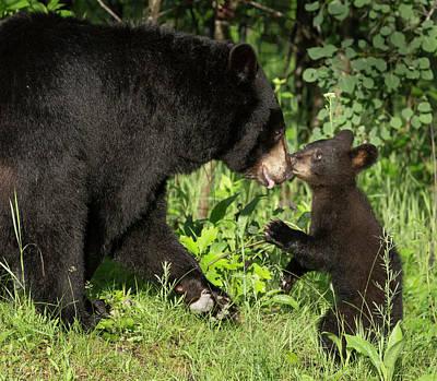 Black Bear Cubs Photograph - Usa, Minnesota, Sandstone, Minnesota by Jaynes Gallery