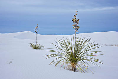 Usa, New Mexico, White Sands National Art Print by Jaynes Gallery