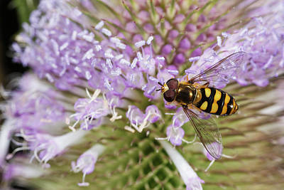 Hoverfly Wall Art - Photograph - Usa, Oregon, Albany, Freeway Ponds by Rick A Brown