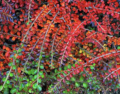 Usa, Oregon, Multnomah County Art Print by Jaynes Gallery
