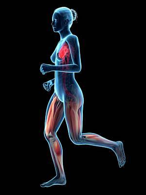 Vascular System Of Runner Art Print by Sebastian Kaulitzki
