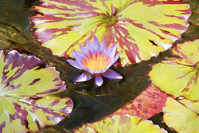 Digital Art - Water Lily by Photographic Art by Russel Ray Photos