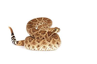 Western Diamondback Rattlesnake Art Print by John Bell