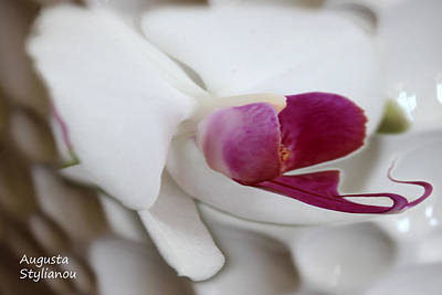 Vivid Colour Digital Art - White Orchid by Augusta Stylianou