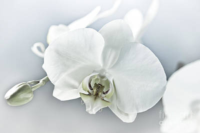 Photograph - White Orchid by Design Windmill