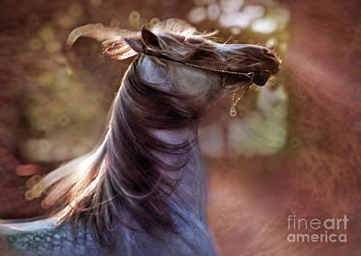 Crazy Horse Photograph - Wild At Heart by Angel  Tarantella
