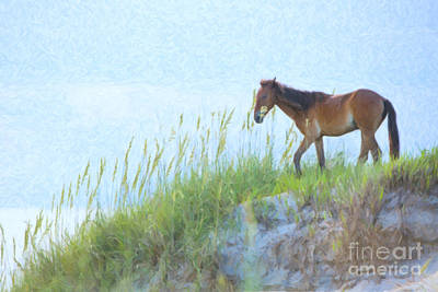 Wild Horse On The Outer Banks Art Print by Diane Diederich