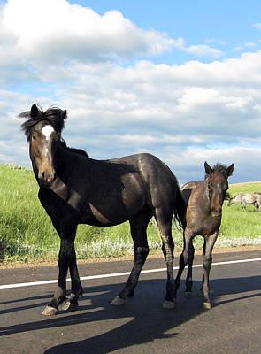 Photograph - Wild Horses by Patricia Januszkiewicz