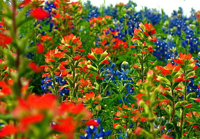 Art Print featuring the photograph Wildflowers by John Babis