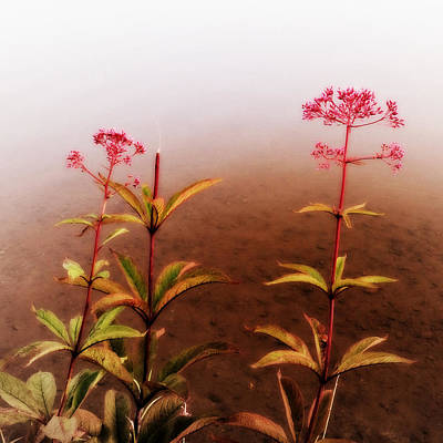 Photograph - Wildflowers On Spruce Knob Lake by Patricia Januszkiewicz