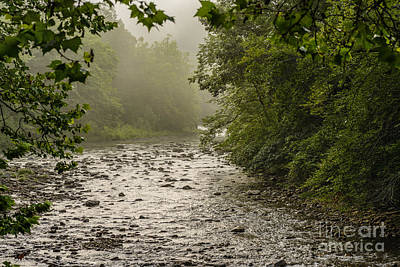 Williams River Summer Mist Art Print by Thomas R Fletcher