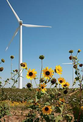 Texas Sunflower Photograph - Wind Turbines by Jim West
