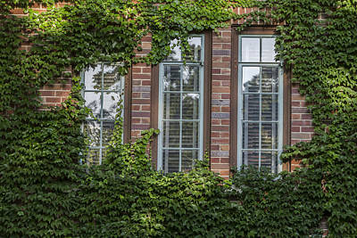 Photograph - 3 Windows And Ivy by John McGraw