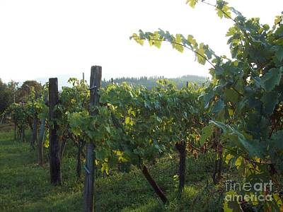 Photograph - Wine Yards In Loppiano by Alessandra Di Noto