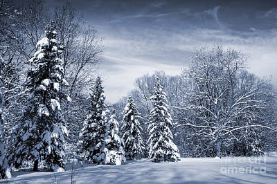 Winter Forest Print by Elena Elisseeva
