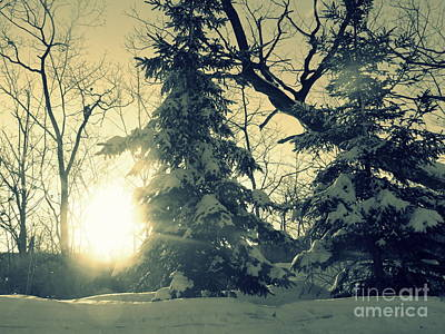 Photograph - Winter by France Laliberte