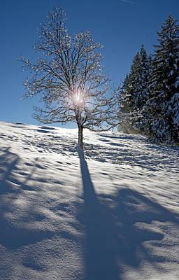 Fine Dining - Winter Sun by Chevy Fleet