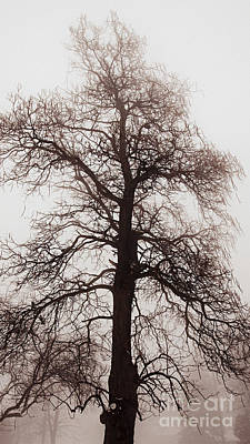 Winter Tree In Fog Art Print by Elena Elisseeva