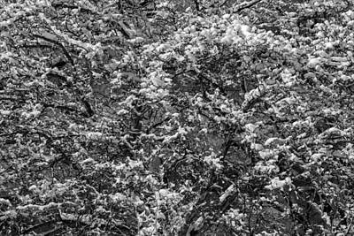 Stellar Interstellar - Winter Trees and Snow by Robert Ullmann