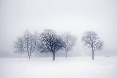 Winter Trees In Fog Art Print by Elena Elisseeva