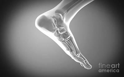 Human Limb Digital Art - X-ray View Of Human Foot by Stocktrek Images
