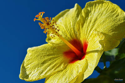 Art Print featuring the photograph yellow Hula Girl Hibiscus by Aloha Art