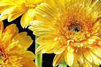 Painterly Photograph - 3 Yellow Painterly Gerber Daisies by Andee Design