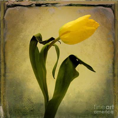 Production Photograph - Yellow Tulip by Bernard Jaubert