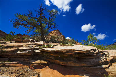 Zion National Park Utah Usa Art Print