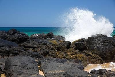 Reptiles - Secret Beach by Steven Lapkin