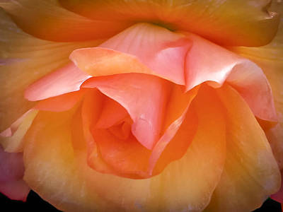 Photograph - Hanging Begonia Blossom by Albert Seger