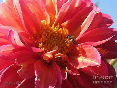 Painting - Dahlia From The Showpiece Mix by J McCombie